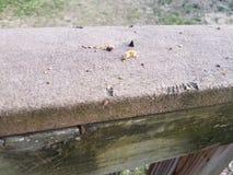 Segni della poppa e dell'alimento e del morso dello scoiattolo su legno fotografia stock