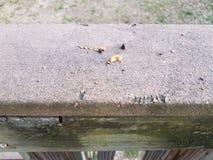 Segni della poppa e dell'alimento e del morso dello scoiattolo su legno fotografia stock libera da diritti