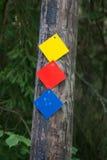 Segni della traccia nel legno Fotografie Stock Libere da Diritti