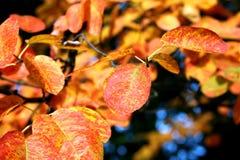 segni di autunno Fotografia Stock Libera da Diritti