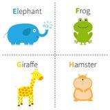 Segni l'alfabeto con lettere E-F dello zoo del criceto della giraffa della rana dell'elefante di G H ABC inglese con le carte di  Immagine Stock