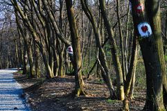 Segni sugli alberi dalla strada Fotografia Stock