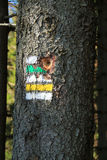 Segni sull'albero Fotografia Stock Libera da Diritti