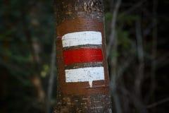 Segni variopinti per l'escursione sulla corteccia di un albero Immagini Stock Libere da Diritti