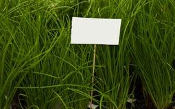 Segno in bianco con le piante Fotografia Stock Libera da Diritti