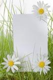 Segno bianco fra i fiori della margherita e dell'erba Fotografie Stock Libere da Diritti