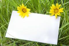 Segno bianco fra i fiori della margherita e dell'erba Immagine Stock Libera da Diritti