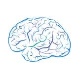 Segno blu del cervello del profilo Fotografie Stock Libere da Diritti