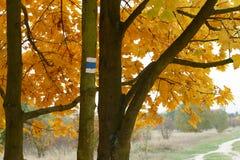 Segno blu turistico di autunno sull'albero Fotografia Stock
