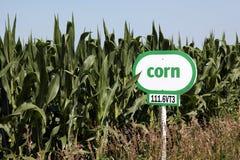 Segno del cereale al lato del campo di cereale Immagini Stock Libere da Diritti
