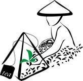 Segno del raccolto del tè Fotografia Stock Libera da Diritti