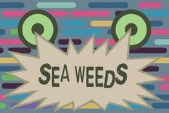 Segno del testo che mostra le erbacce del mare Grandi alghe della foto concettuale che crescono nella flora delle piante del mari royalty illustrazione gratis