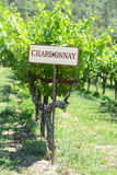 Segno dell'uva di Chardonnay Fotografia Stock Libera da Diritti