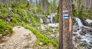 Segno della freccia della traccia di escursione sull'albero Fotografie Stock Libere da Diritti