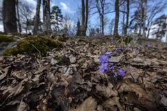 Segno della primavera Fotografia Stock