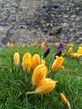 Segno della primavera Immagini Stock