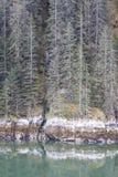 Segno di alta marea congelato Fotografia Stock