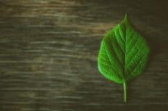 Segno di ecologia, permesso verde fotografia stock libera da diritti