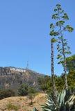 Segno di Hollywood Fotografia Stock