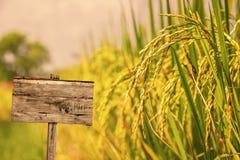 Segno di legno con spazio vuoto nel giacimento del riso Immagine Stock