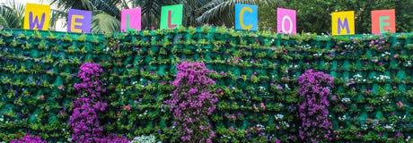 Segno positivo e fiori. Immagine Stock