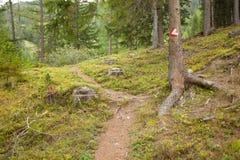 Segno rosso e bianco del percorso dipinto in una pietra dentro legno, in a Immagine Stock Libera da Diritti