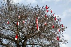 Segno su ordinazione tradizionale bulgaro Martenitsa della molla sull'albero Fotografia Stock Libera da Diritti