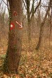 Segno sull'albero in foresta Fotografia Stock Libera da Diritti