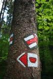 Segno turistico rosso sull'albero Fotografia Stock