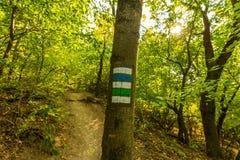 Segno turistico sull'albero, vicino al percorso in parco nazionale Fotografie Stock Libere da Diritti