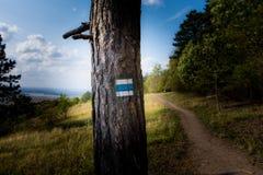 Segno turistico sull'albero, vicino al percorso in parco nazionale Immagini Stock Libere da Diritti