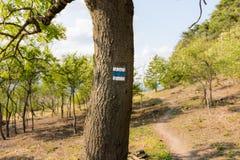 Segno turistico sull'albero, vicino al percorso in parco nazionale Fotografia Stock