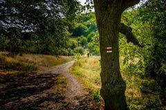 Segno turistico sull'albero vicino al sentiero nel bosco, erba verde, alberi Immagini Stock