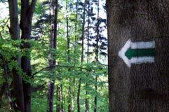Segno verde sull'albero Fotografie Stock