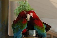Segredo que diz pássaros Imagens de Stock