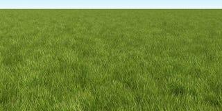 segregująca zieleń Fotografia Stock