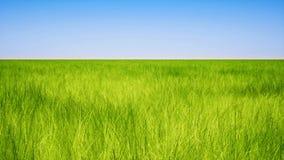 Segregujący zielonej trawy i błękita nieba jasny tło ilustracji