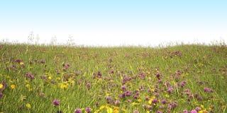 segregujący kwiaty Zdjęcie Royalty Free