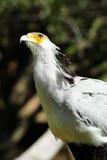 Segretaria uccello immagine stock libera da diritti