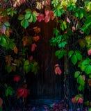 segreto del giardino Immagine Stock