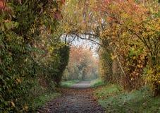 Segua il percorso attraverso gli alberi nella caduta Fotografia Stock Libera da Diritti