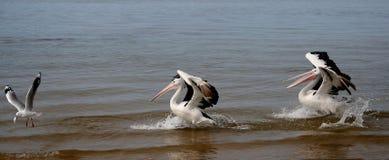 Segua quel pesce!!! Immagini Stock Libere da Diritti