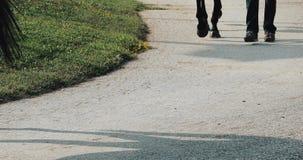 Seguendo seguire del colpo gambe dei cavalli come è condotto da altri alla pista di corsa archivi video