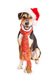 Segugio di Natale felice Fotografia Stock Libera da Diritti