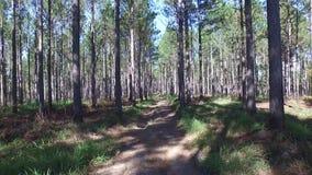 Seguimento no pinho Forest Exporer ou assustador! vídeos de arquivo