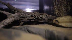 Seguimiento de un ratón dentro de su jaula almacen de video