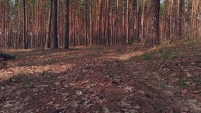 Seguimiento del tiro del bosque en otoño metrajes