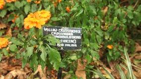 Seguimiento del tiro de flores anaranjadas hermosas en jardines botánicos almacen de video