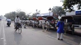 Seguindo o tiro dos povos com os carros do cavalo na borda da estrada, Agra, Uttar Pradesh, Índia video estoque