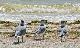 Segulls στην ακτή Στοκ Εικόνα